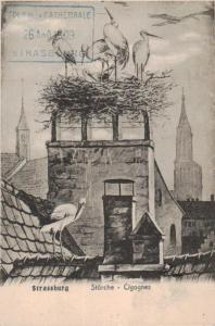 Strassburg   -alte Karte  (ke227 ) siehe scan