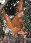 Bild zu Dresden Zoologisc...