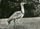 Ansichtskarte  Vogel: Riesentrappe 1982