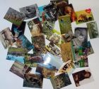 Bild zu 31 Tierkarten vie...