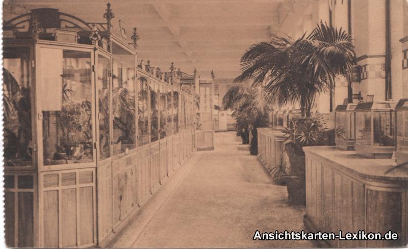 Antwerpen Zoologischer Garten - Reptilien