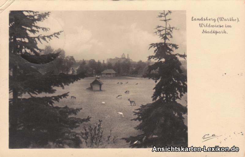 Landsberg (Warthe) Wildwiese im Stadtpark
