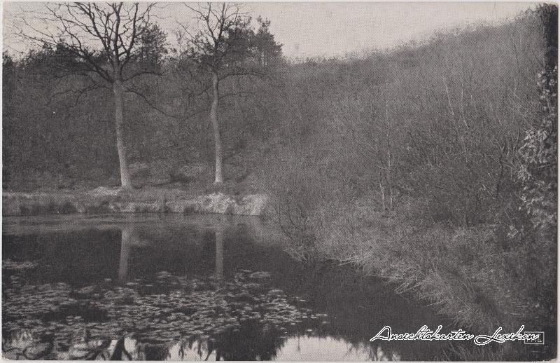 Ansichtskarte Wyler Kranenburg Hexentanzplatz am Teufelsberg 1918