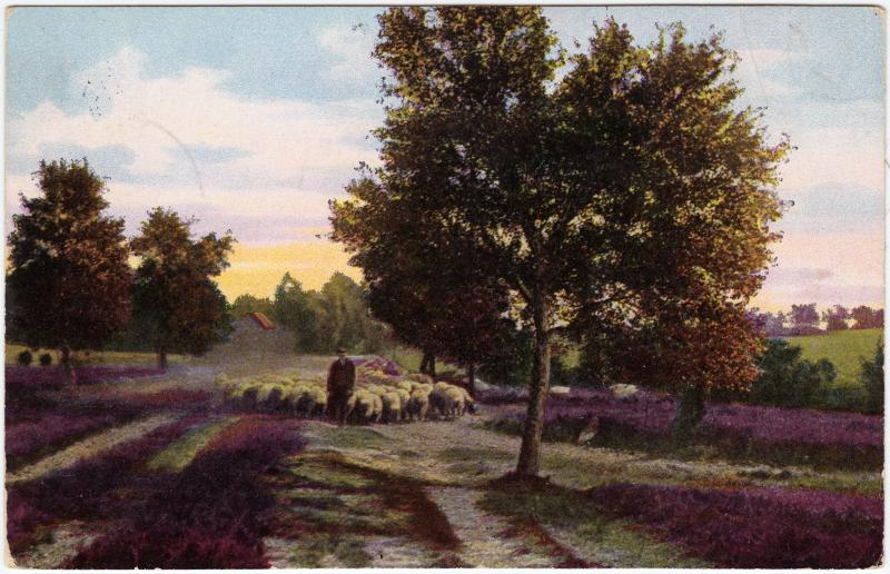 Lüneburger Heide, Heimkehrende Schnuckendherde 1916