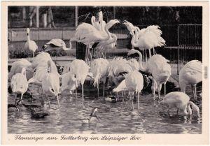 Leipzig Zoologischer Garten - Flamingos am Futtertrog Ansichtskarte 1935