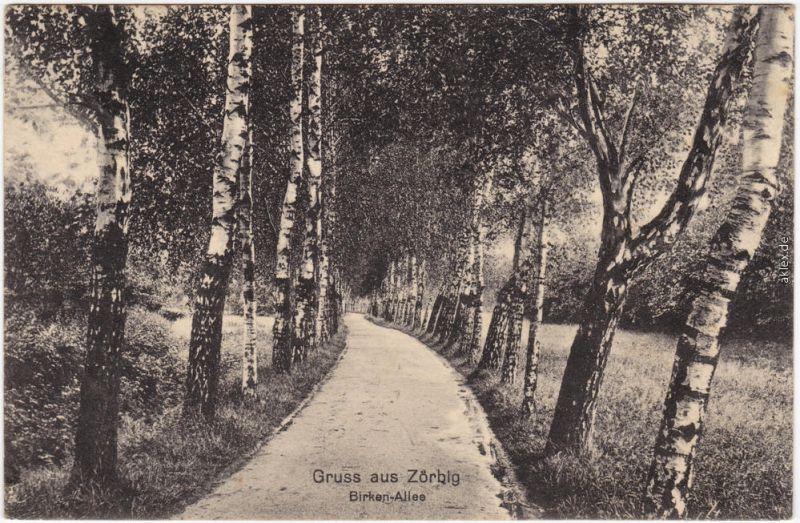 Zörbig Birkenallee Ansichtskarte Anhalt Bitterfeld 1913