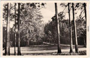 Ansichtskarte Greiz Werdauer Wald, An der Königsbuche 1938