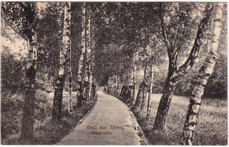 Zörbig Birken-Allee b Anhalt Bitterfeld Ansichtskarte 1926