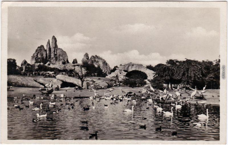 Fotokarte Stellingen Hamburg Tierpark Hagenbeck - großer Vogelteich 1930