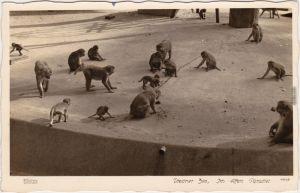 c1934 Dresden Zoo, Affen im Paradies Foto Ansichtskarte Walter Hahn:#12229