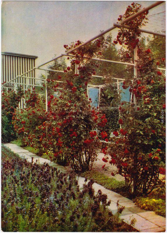 Erfurt Internationale Gartenbauausstellung der DDR (IGA) 1967