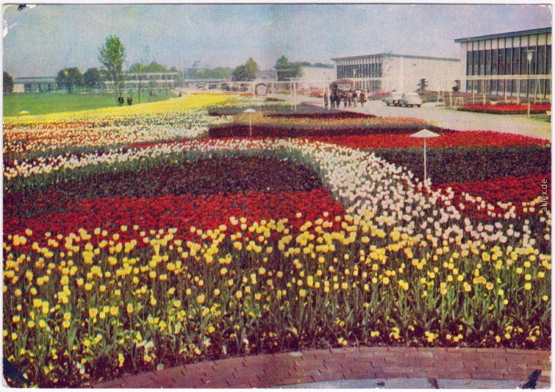Erfurt Internationale Gartenbauausstellung der DDR (IGA) 1962