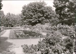 Forst (Lausitz) Baršć Blick in den Rosengarten - Blumenbeete 1978