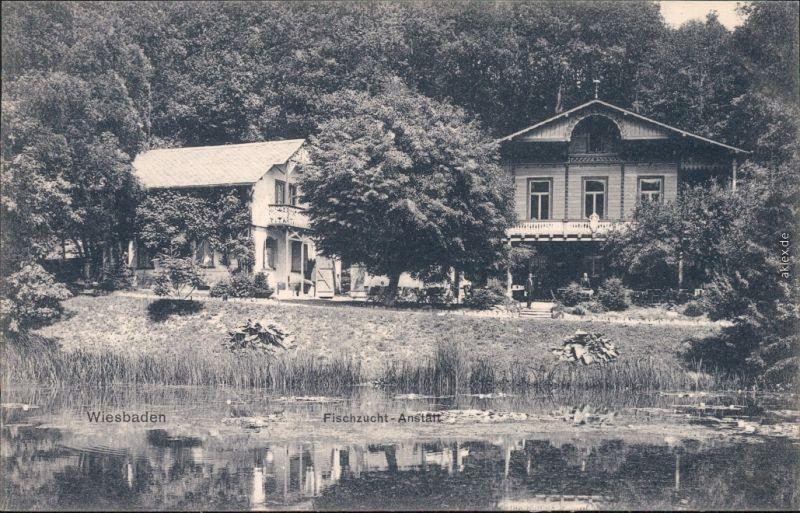 Wiesbaden Fischzucht-Anstalt Ansichtskarte 1906