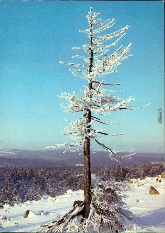 Ansichtskarte Ilsenburg (Harz) Brocken (Harz) im Winter 1982