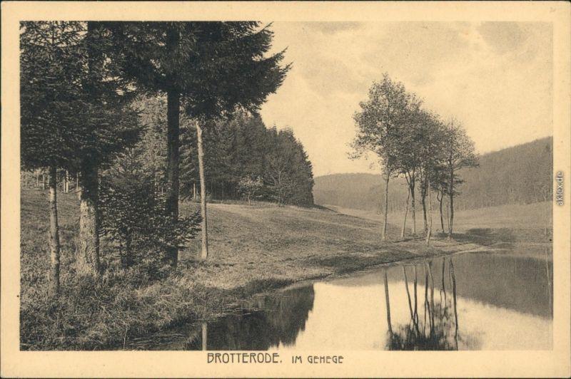 Ansichtskarte Brotterode Im Gehege 1928