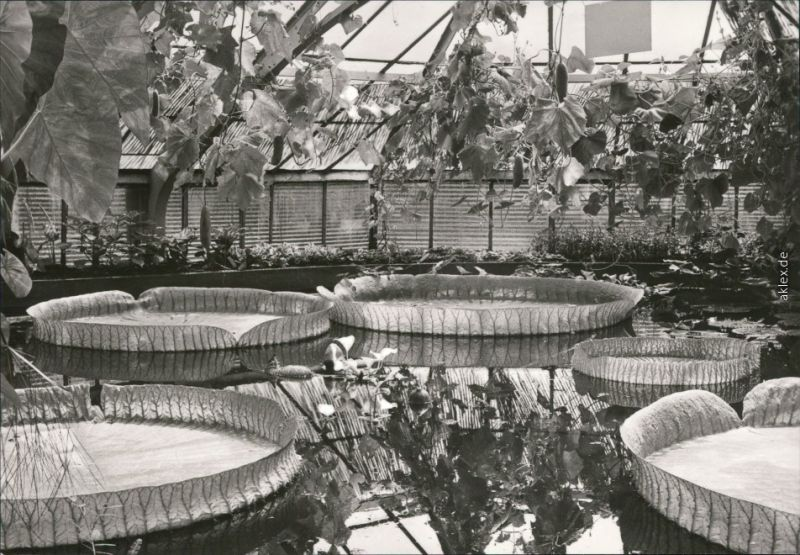 Magdeburg Gruson Gewachshauser Exot Pflanzensammlung Victoria