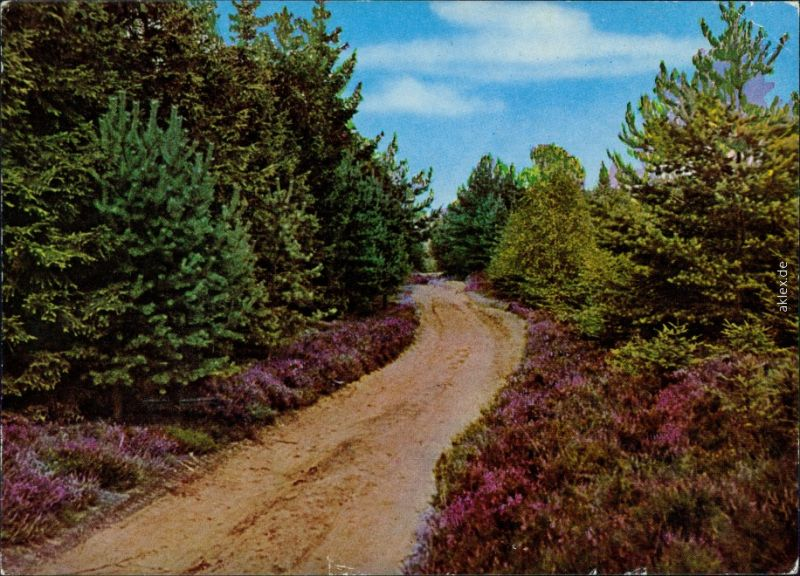 _Niedersachsen allgemein Lüneburger Heide - Einsamer Wanderweg 1975