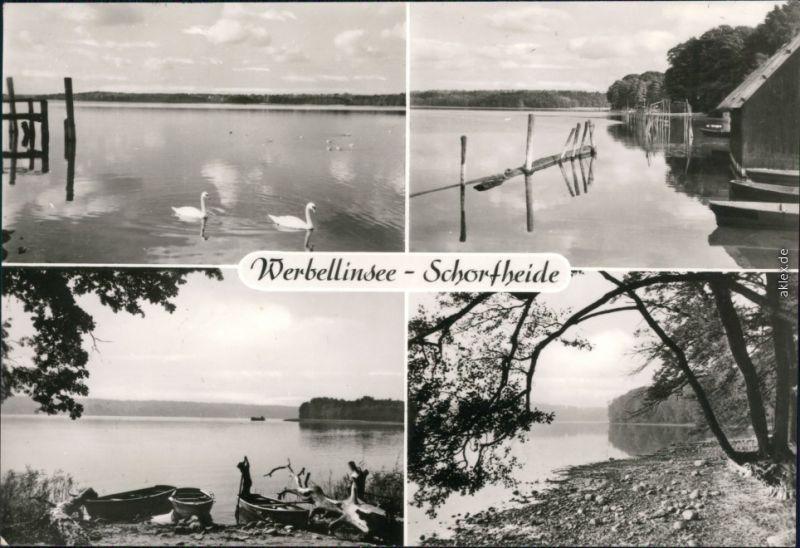 Ansichtskarte Schorfheide See mit Schwänen, Boote und Uferbereich g1980