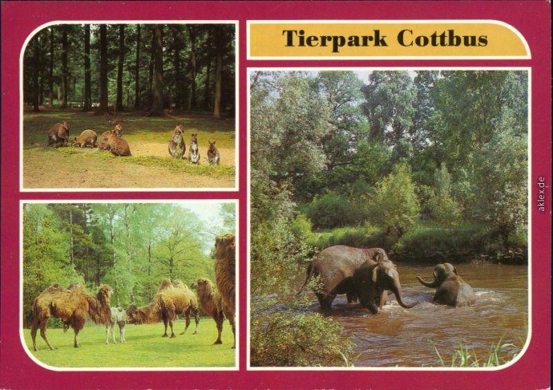 Cottbus Choćebuz Tierpark Asiatische Elefanten Beim Baden in der Spree 1986