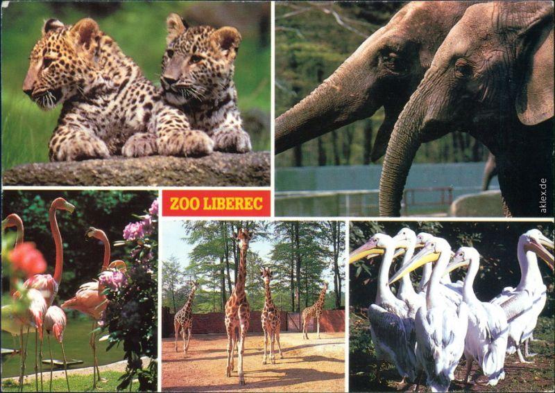 Reichenberg Liberec Tierpark / Zoo - Panthera Plamingo, Giraffe, Pelikan 1992
