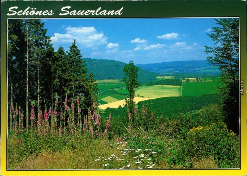 Ansichtskarte Jagdhaus-Schmallenberg Blick zum Wilzenberg 1997