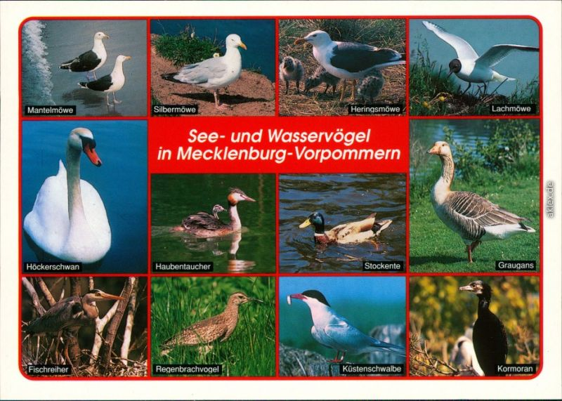 Mecklenburg Vorpommern See- und Wasservögel:  Möwe, Fischreiher, Graugans 2000