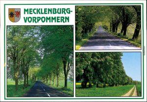Ansichtskarte Mecklenburg Vorpommern Mecklenburg Vorpommern - Alleen 1995