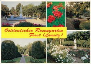 Ansichtskarte Forst (Lausitz) Baršć Rosengarten 1993