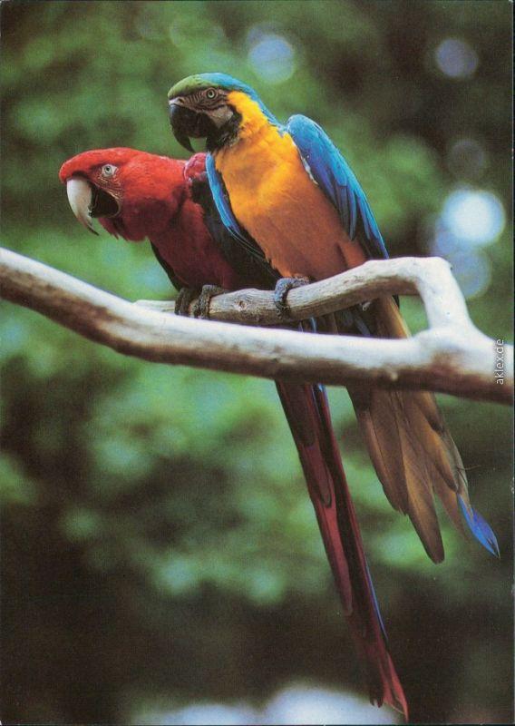 Ansichtskarte Cottbus Choćebuz Tierpark  Grünflügelara, Ararauna 1995