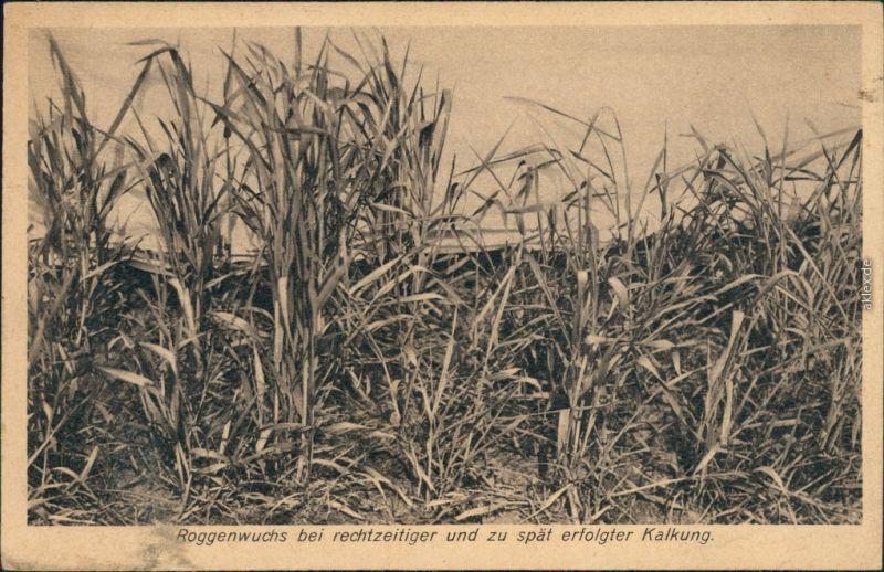 Ansichtskarte  Landwirtschaft - Werbekarte Kalken 1924