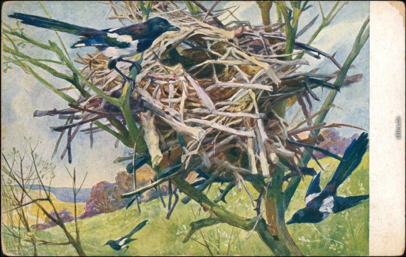 Ansichtskarte  Vögel bauen Nest - Künstlerkarte 1913