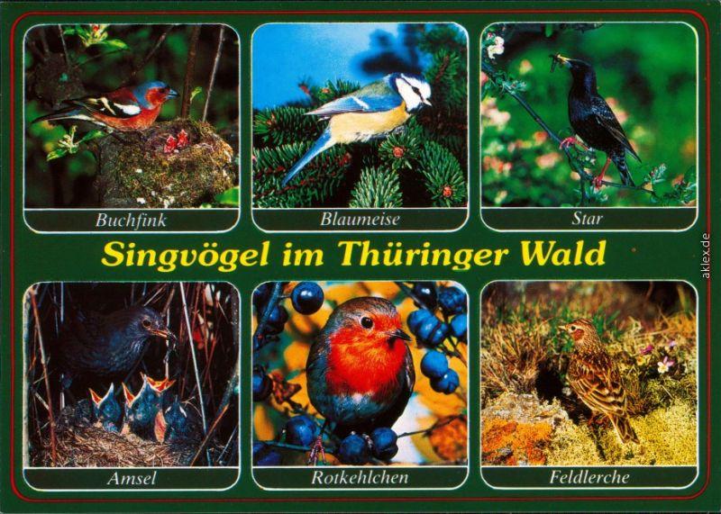 Ansichtskarte  Vögel im Thüringer Wald - Buchfink, Blaumeise, Star 1999