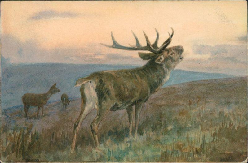 Ansichtskarte  Künstlerkarte: Hirsch, Rehe 1916