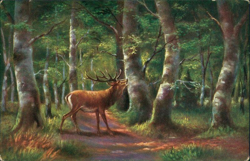 Ansichtskarte  Künstlerkarte: Hirsch im Wald 1913