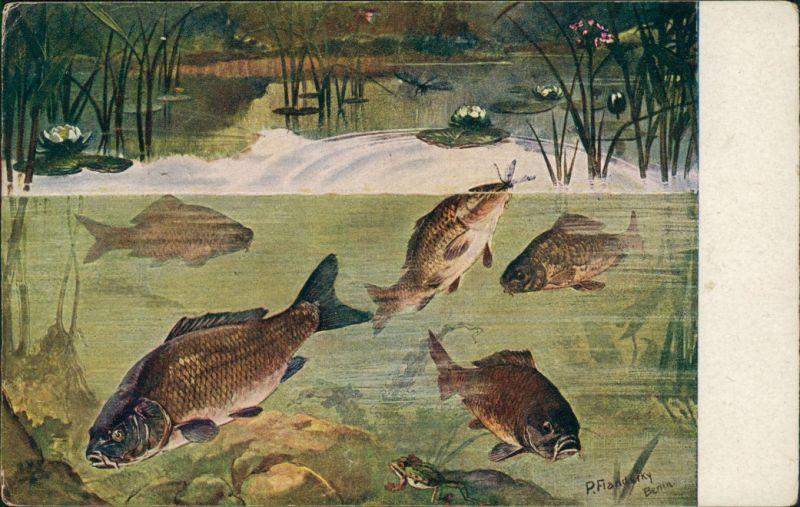 Ansichtskarte  Meinholds Tierbilder - Fische 1925