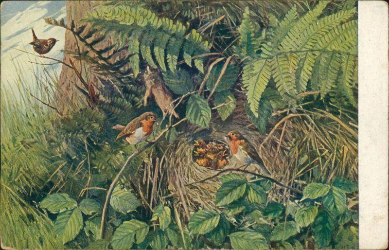 Ansichtskarte  Meinholds Tierbilder - Vögel Nest 1925