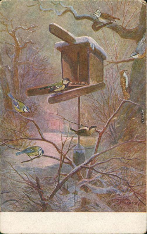 Künstlerkarte: Blaumeisen im Winter auf Zweigen und Vogelhaus 1926