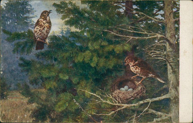 Ansichtskarte  Vögel - Nest im Wald - Meinhold Tierbilder 1925