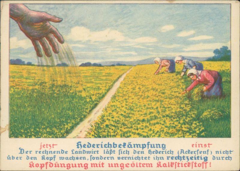 Ansichtskarte  Hedrichbekämpfung - Stickstoffdüngung KK Landwirtschaft 1924