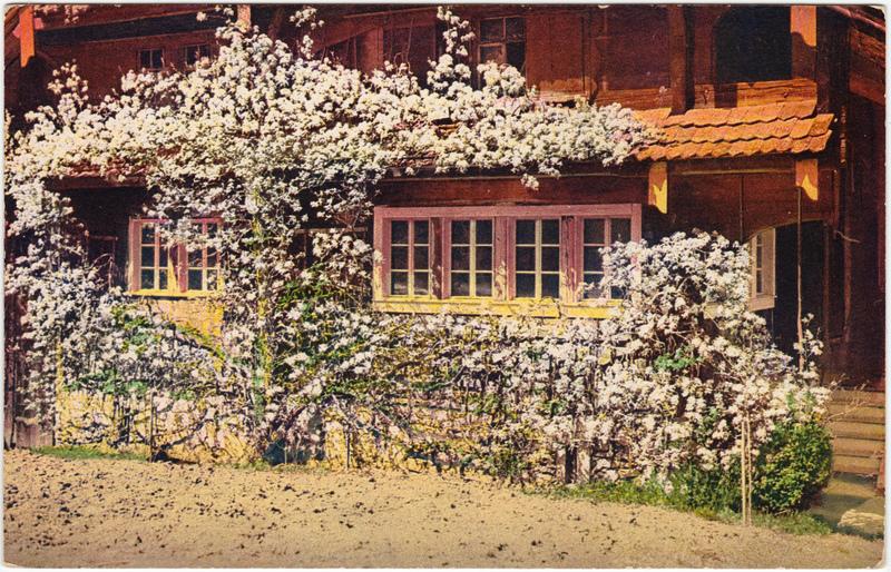 Haus mit Blumenranken: Stempel Bautzen 1918