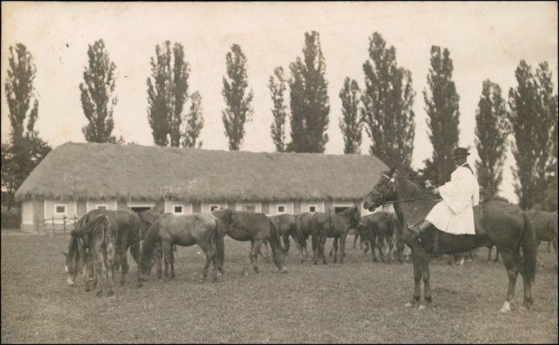 Postcard Fünfkirchen Pécs (Pečuh) Pferde, Bauer und Gestüt 1926