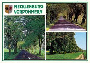Ansichtskarte Mecklenburg Vorpommern Mecklenburg Vorpommern-Alleen c1995