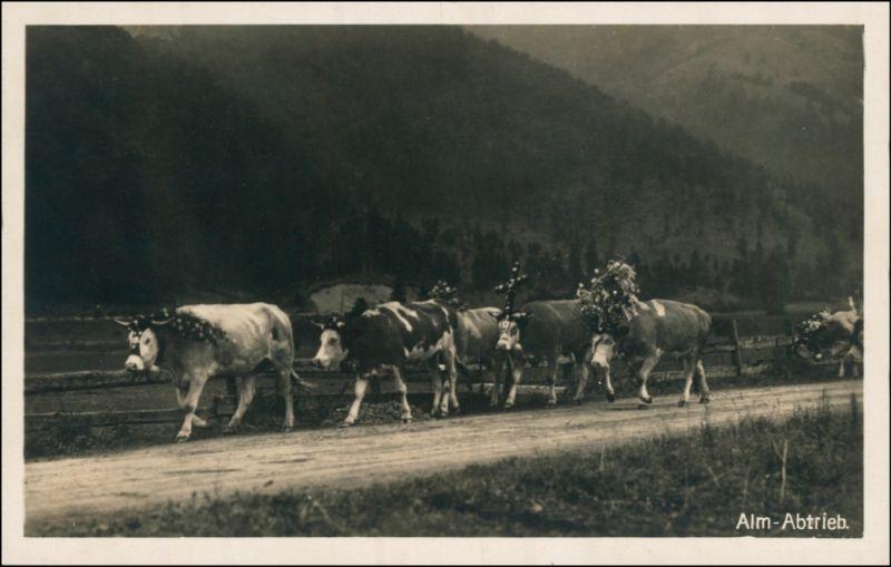 Ansichtskarte  Alm Abtrieb - Kühe mit Schmuck 1930