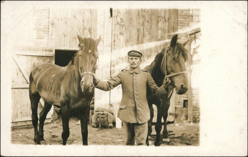 Ansichtskarte  Pferde, Soldaten - Gestütt 1918