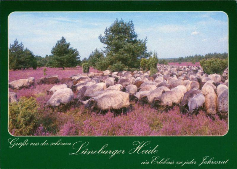 Ansichtskarte .Niedersachsen Heidschnuckenherde in der Lüneburger Heide 1990