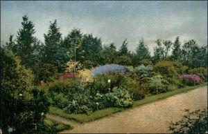 Ansichtskarte Dahlem-Berlin Kgl. Botanischer Garten - Felsenpfalanzen 1913