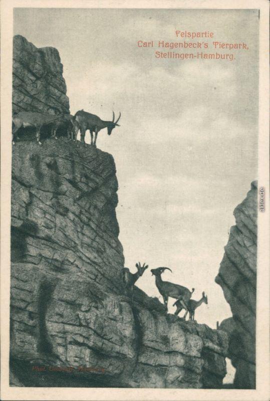 Ansichtskarte Stellingen-Hamburg Felspartie - Tierpark Hagenbeck 1926