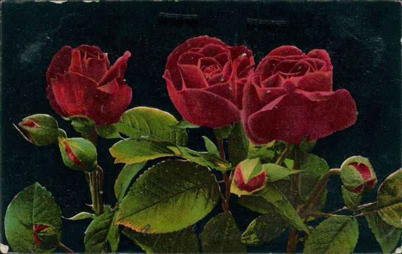 blumen wei e u rote rosen bl ten knospen nr 487170. Black Bedroom Furniture Sets. Home Design Ideas