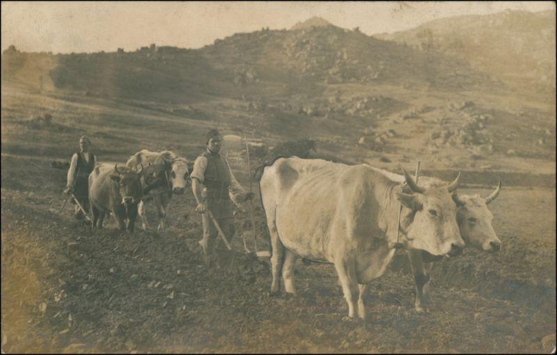 Ansichtskarte  Balkan: Bauern mit Ochsenpflug - Privatfoto Ak 1918
